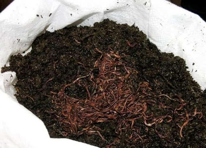 Etube fatsexy naket girl