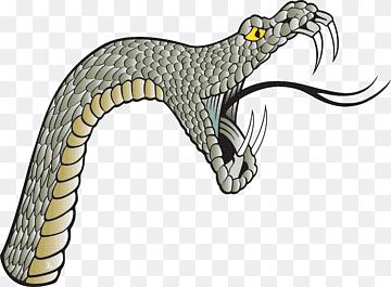 Bear girl porn
