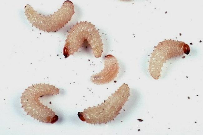 savannah stern bikini