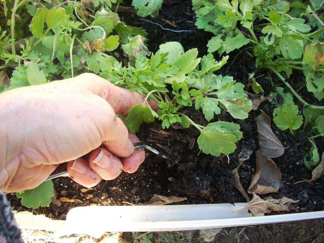 selena gomez boobs uncensored