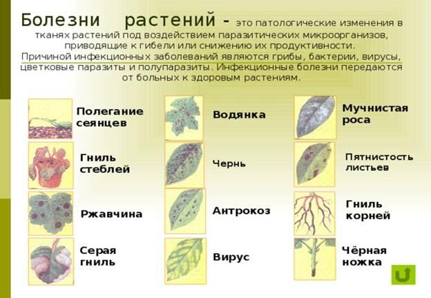 Retro nudes mature